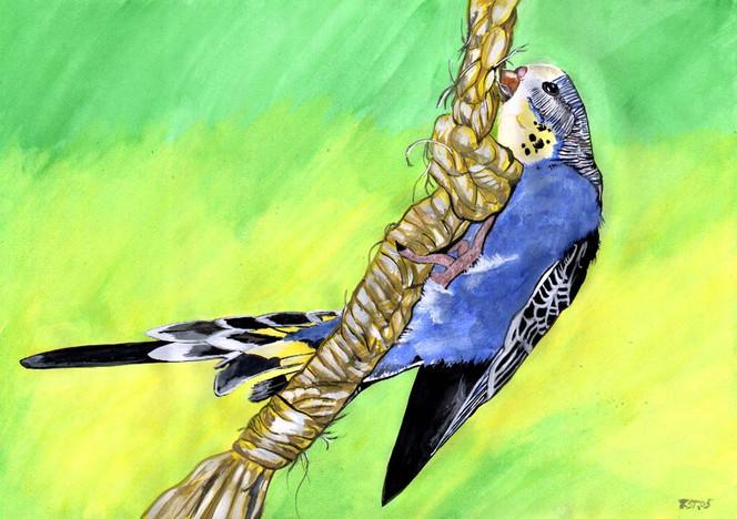 Blau, Vogel, Tiere, Grafik, Wellensittich