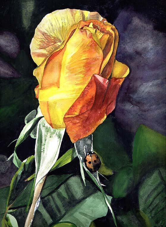 bild rose aquarell pflanzen von rene steittmann bei kunstnet. Black Bedroom Furniture Sets. Home Design Ideas