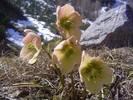 Blumen, Berge, Fotografie, Frühling