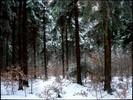 Natur, Winter, Emotion, Farben