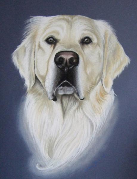 Portrait, Hund, Gold, Retriever, Pastellmalerei, Malerei