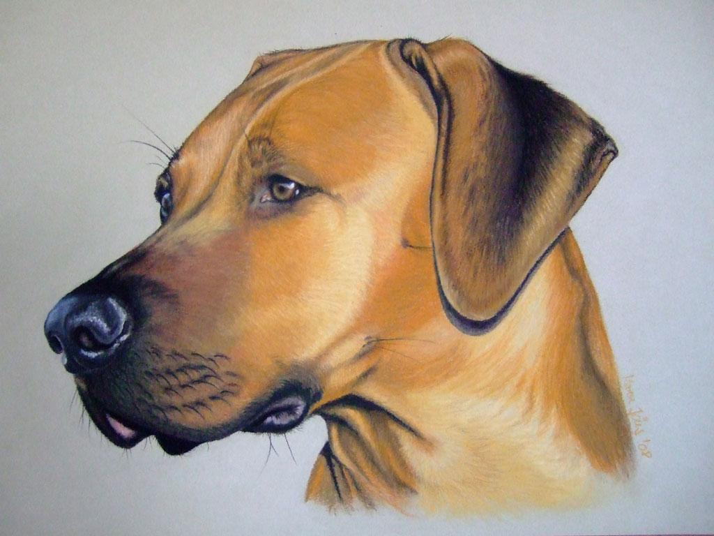 bild ridgeback hund pastellmalerei portrait von maren j ns bei kunstnet. Black Bedroom Furniture Sets. Home Design Ideas