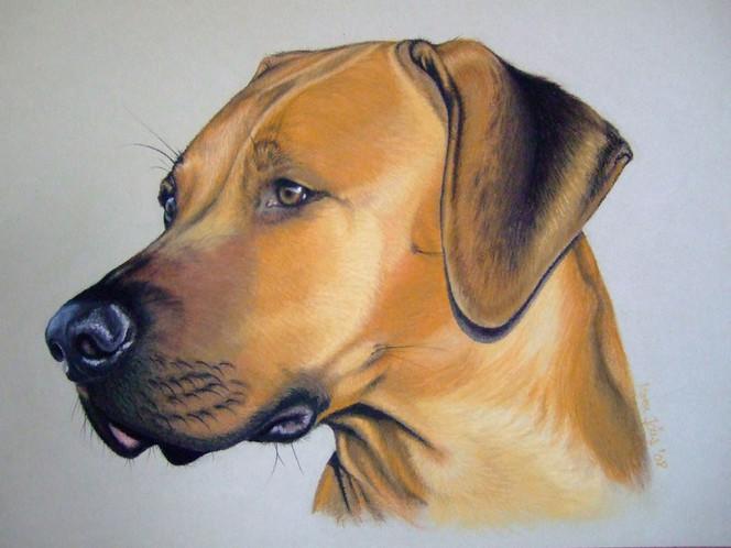 Rhodesian, Hund, Pastellmalerei, Portrait, Ridgeback, Malerei