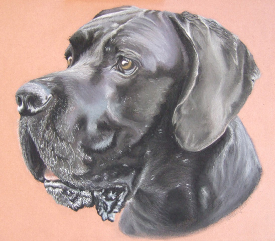 Dogge, Pastellmalerei, Portrait, Hund, Malerei, Tiere