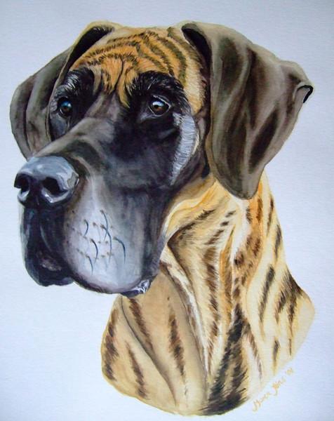 Portrait, Hund, Dogge, Aquarellmalerei, Malerei, Tiere