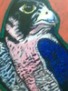 Adler, Vogel, Malerei, Zeichnungen