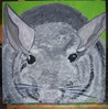 Tiere, Chinchilla, Haustier, Tierportrait