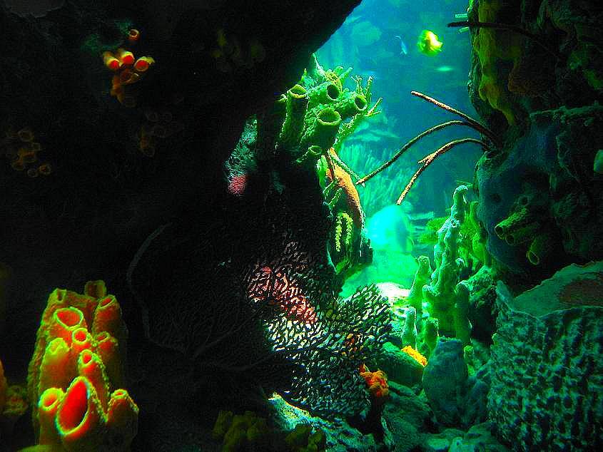 bild fotografie unterwasser tauchen aquarium von egli richard bei kunstnet. Black Bedroom Furniture Sets. Home Design Ideas