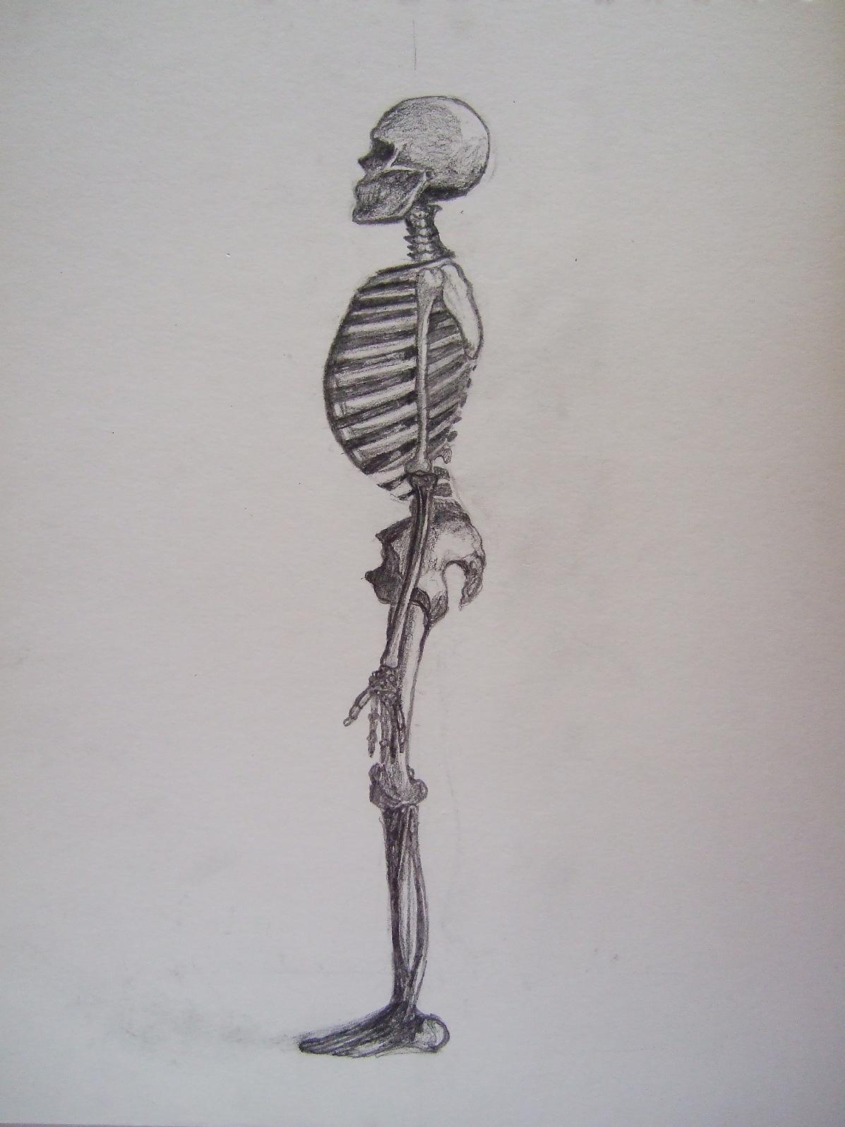 skelett - Skelett, Knochen, Anatomie, Zeichnungen von Pia bei KunstNet