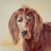 Hund, Rot, Irish setter, Braun