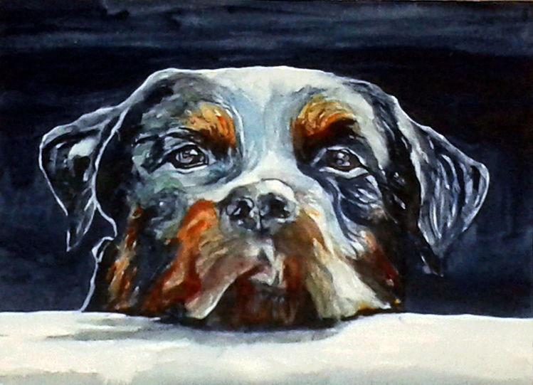 Blick, Aquarellmalerei, Portrait, Hund, Tiere, Aquarell