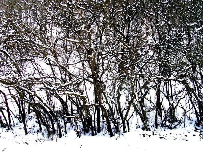 Äste, Fotografie, Landschaft, Schnee, Winter