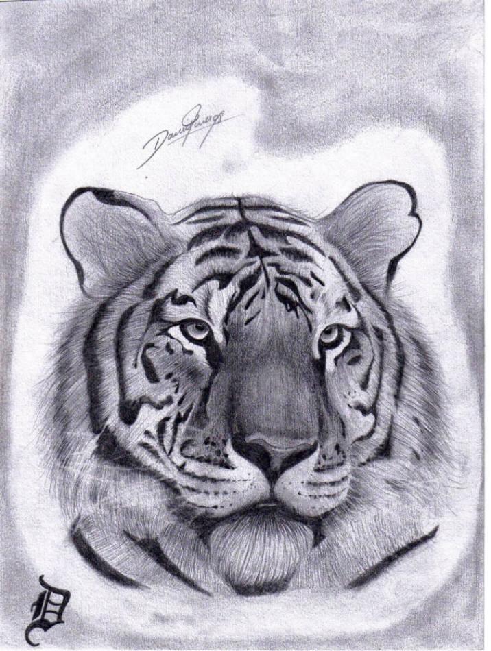 Tiger Tiger Zeichnung Tiere Zeichnen Von Daniel On Kunstnet