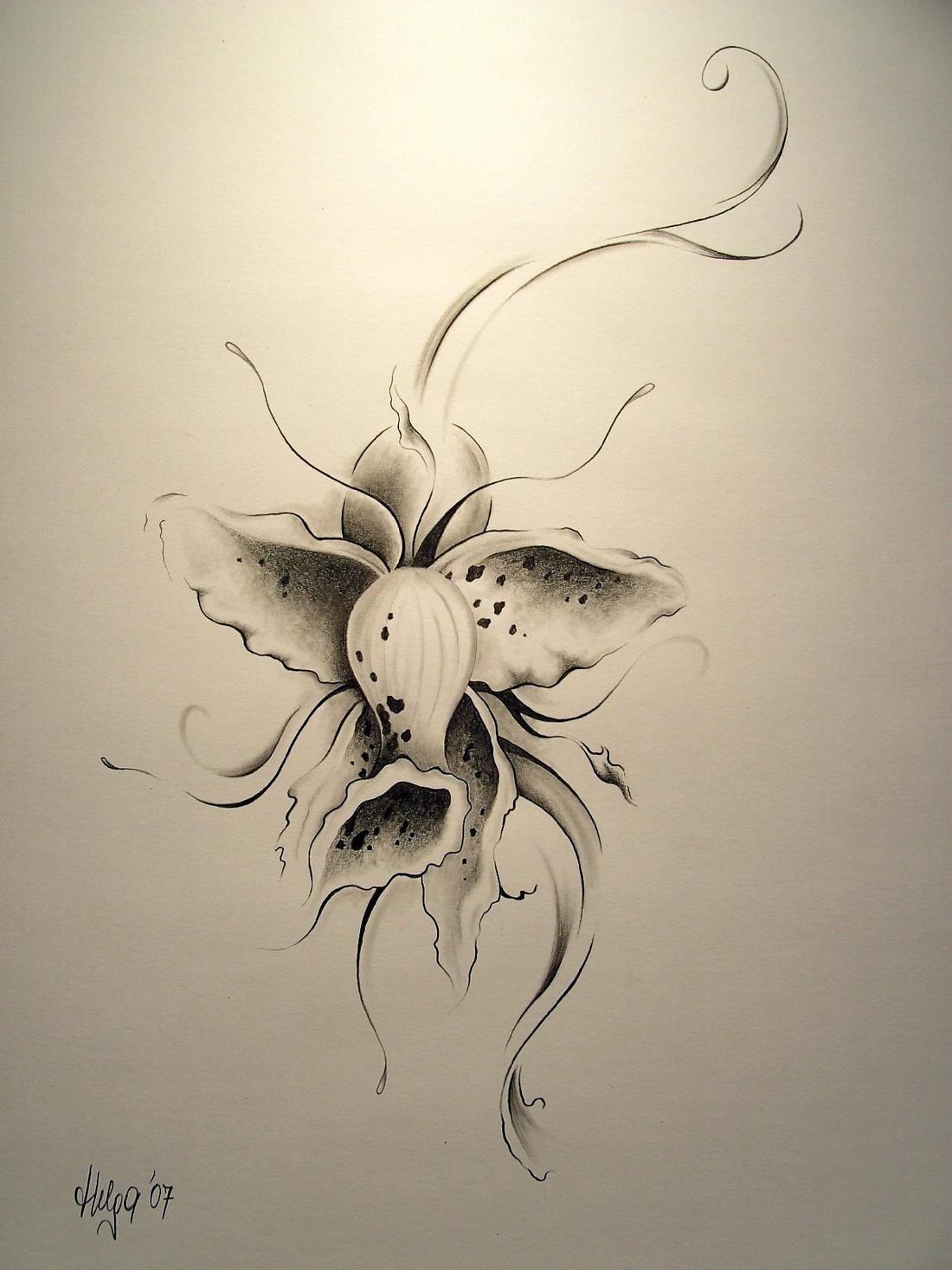 190 Bleistiftzeichnung Blumen Zeichnung Bilder Und Ideen