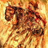 Augen, Tiere, Pferde, Zeichnungen