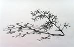 Bleistiftzeichnung, Schatten zeichnen, Zeichnung, Ast zeichnen