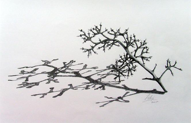 weintrauben strunk bleistiftzeichnung schatten zeichnen zeichnung ast zeichnen von lidi bei. Black Bedroom Furniture Sets. Home Design Ideas