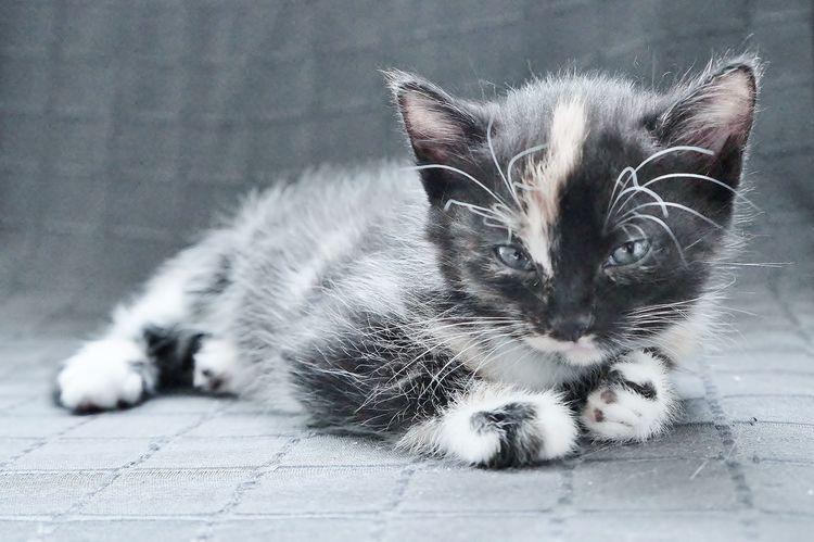 Katze, Mitze, Fotografie