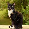 Natur, Katze, Erwartung, Fotografie