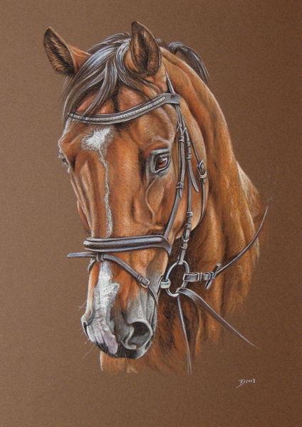 Pferde, Pony, Pferdeportrait, Pastellmalerei, Malerei, Tiere