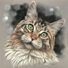 Katze, Maine coon, Malerei