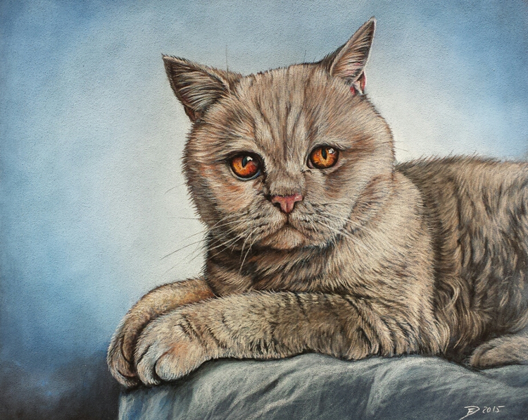 Katze, Pastellmalerei, Zeichnungen, Tiere