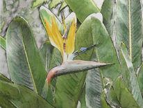Funchal, Splendour, Pracht, Tuschmalerei
