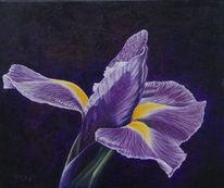 Blumen, Natur, Iris, Blüte