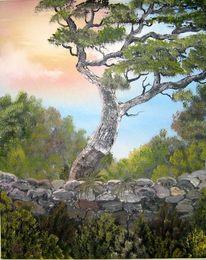 Alt, Sardinien, Baum, Korckeiche süden