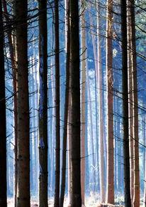 Fotografie, Landschaft, Wald