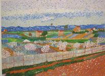 Provence, Garten, Baum, Pfirsich