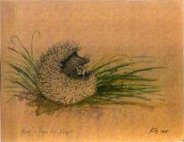 Tierzeichnung, Aquarellmalerei, Tiere, Igel