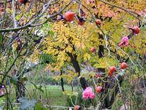 Stillleben, Garten, Ungarn, Szigetszentmiklós