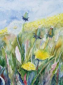 Blüte, Sommer, Wiese, Löwenzahn