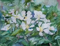 Frühling, Aquarellmalerei, Mecklenburg, Blüte