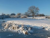 Schnee, Eisblumen, Fotografie, Wunderschön