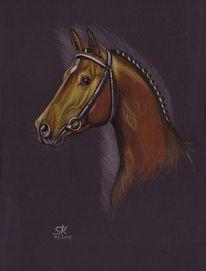 Portrait, Zeichnung, Zeichnungen, Pferdeportrait