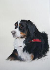 Portrait, Hund, Pastellmalerei, Malerei