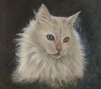 Figural, Türkisch, Angora, Katze