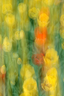 Lightpainting, Blumen, Wischeffekt, Lichtmalerei