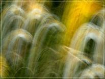 Fotografie, Blumen, Lightpainting, Wald