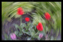 Abstrakt, Blumen, Lightpainting, Wald