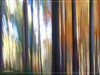 Fotografie, Lightpainting, Baum, Herbst
