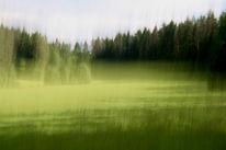 Wald, Lichtmalerei, Baum, Lichtung