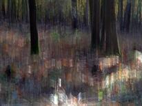 Fotografie, Wald, Lichtmalerei, Herbstwald