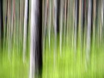 Fotografie, Baum, Lightpainting, Wald