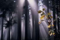 Märchenwald, Wald, Zauberwald, Morgenstimmung