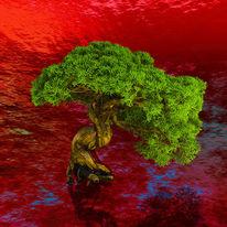 Wasser, Rot, Bonsai, Grün
