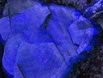 Tod, Muster, Digital, Baum
