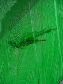 Holz, Blätter, Vergänglichkeit, Baum
